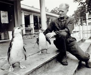 Pingviner og ikke navngitt ansatt ved Akvariet. Foto fra omkring 1980. Fotograf: Kristian Dahl. Arkivet etter Morgenavisen A/S, Bergen Byarkiv.